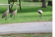 closeup of cranes