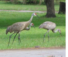 closeup2 of cranes